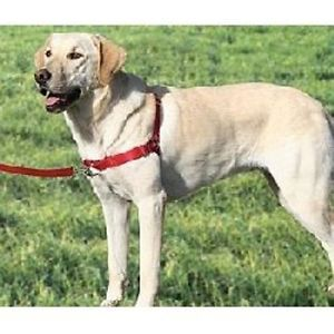 Premier Gentle Leader Easy Walk Dog Harnesses Authorized Dealer
