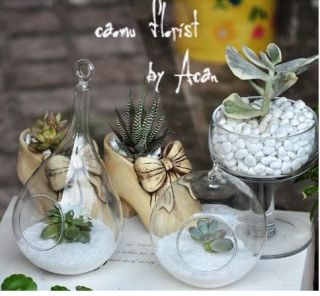 Hanging Terrarium DIY Light Glass Globe Wedding Centerpieces Candle Holder Plant