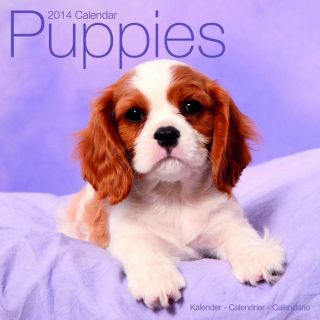 Puppies Wall Calendar 2014
