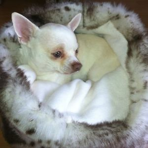 Chihuahua Dog Pet Bed Animal Print Luxury Faux Fur Snuggle Sak Puppy Hug Towie