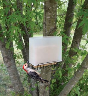 Bird Feeder Large Suet and Seed Cake Saver Birdfeeder