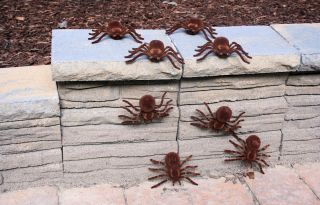 "Large 5"" Tarantula Spiders Lot of 36 Creepy Realistic Halloween Props"