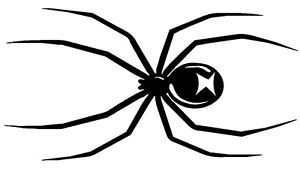 "Spider Graphics Car Decals Stickers 8""X4"""